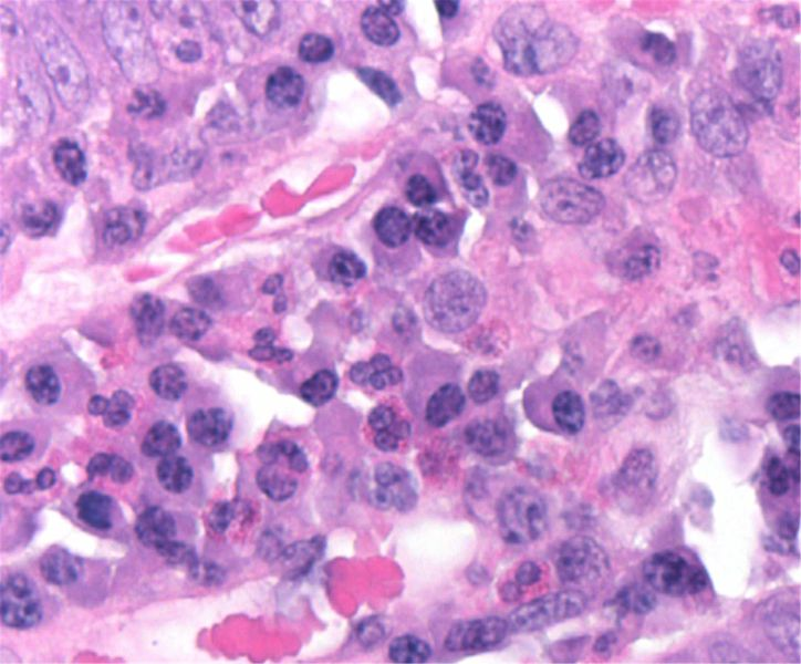 Hematoxylin Harris (for histology)